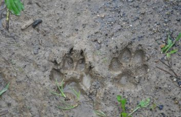 In the footsteps of animals